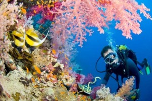 2818168_COM_scuba_diving-Tag-Yachts-South-Africa